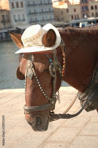 Deurstickers Stierenvechten Pferd mit Hut