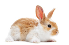 One Young Baby Rabbit Isolated