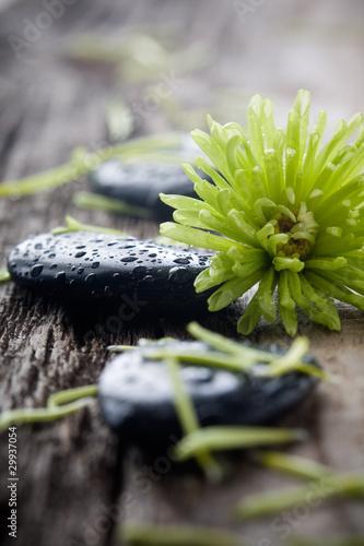 kamienie-z-kropelkami-wody-z-zielonym-kwiatem