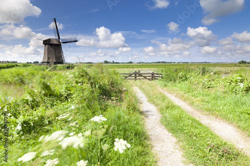 Dutch windmill in fresh green field in summer