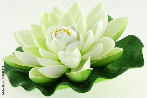 Poster de jardin Nénuphars fleur blanche de lotus