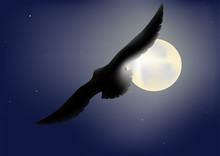 Bird On A Background A Nightly Moon