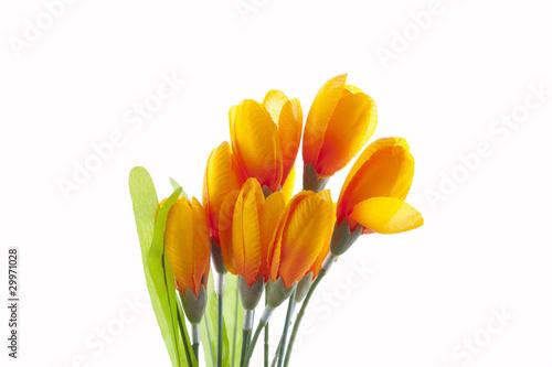 Foto op Plexiglas Tulp flowers