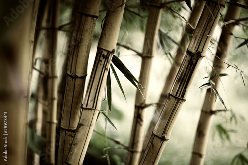 Foto op Plexiglas Bamboe Bamboo forest background