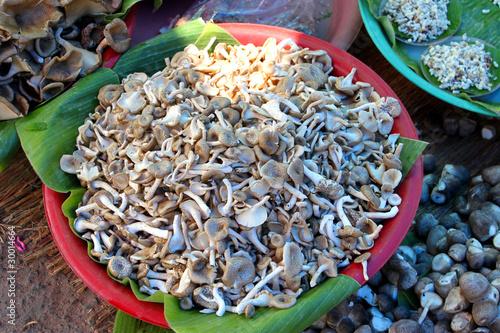 Fotografie, Obraz  Mushrooms