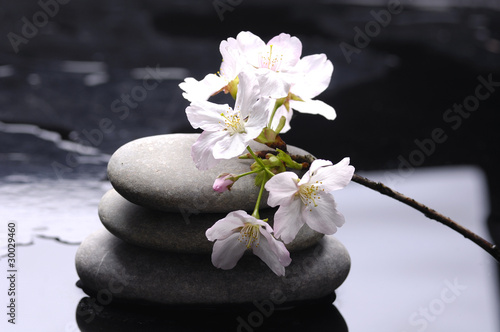 Foto op Canvas Zen therapy stones with white flower
