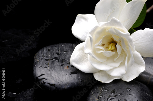 Staande foto Spa Still life macro of camellia