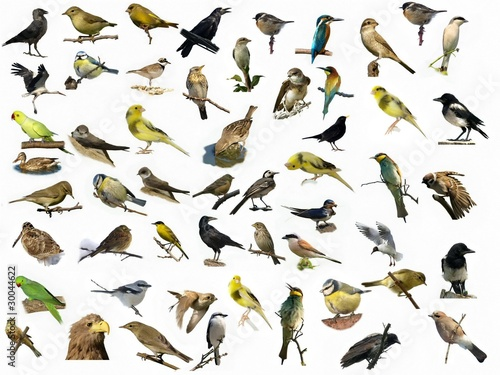 Fototapeta  Set of 54 different photographs of birds isolated