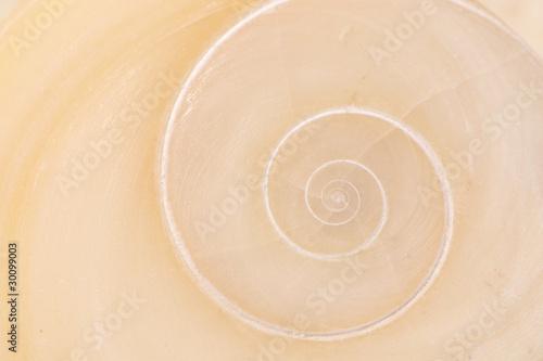 Tuinposter Spiraal Operculum mit spiralförmigem Muster von Muschel am Strand