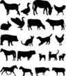 farm animals collection vector
