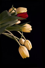 Beautiful Bouquet Of Yellow Tulips With Single Red Tulip
