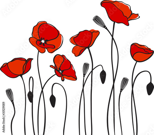 red poppies - 30129089