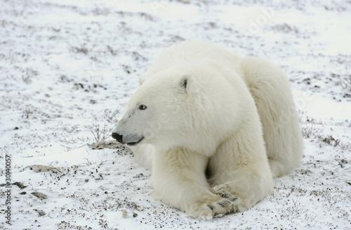 Foto op Aluminium Ijsbeer Portrait of a polar bear.