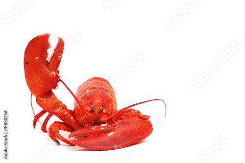 Leinwand Poster hello lobster