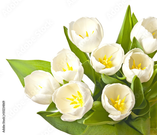 Wall Murals Magnolia spring flowers - white tulips