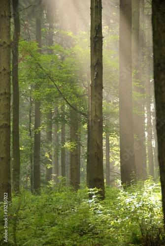 Fototapeten Wald Bosco