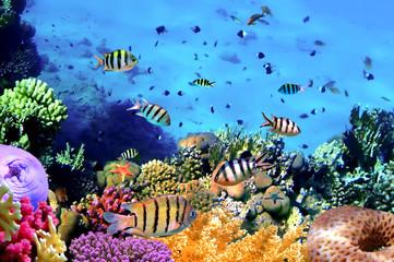 Beautiful Corals and Fish