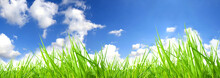 Fresh Grass With Perfect Sky
