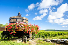 Vineyards Of Cote De Beaune Near Pommard, Burgundy, France