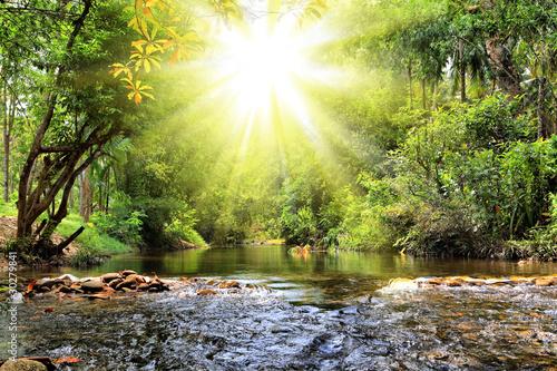 Poster Rivière de la forêt River in jungle, Thailand