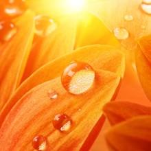 Orange Flower Petals With Water Drops On It