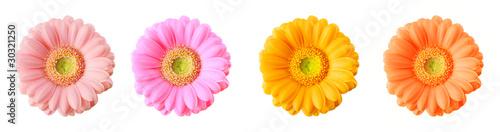 Fotobehang Gerbera Colorful gerberas