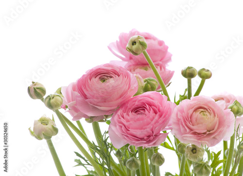Photo bunch of pale pink ranunculus (persian buttercup)