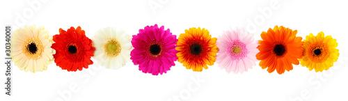 Montage in der Fensternische Gerbera Frühlings Blumen - Blumengirlande freigestellt