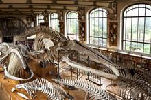 Musée Museum Histoire Naturel...