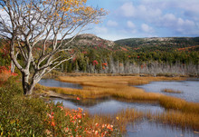 Seal Cove Pond Acadia National Park Maine
