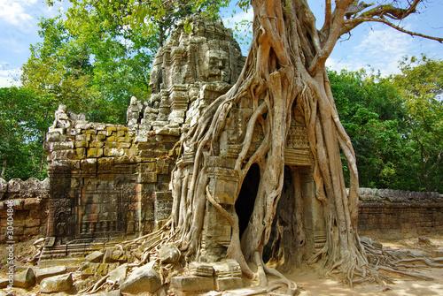 Foto  Enorme Wurzeln des tropischen Baums auf dem Tempel nahe Angkor Wat
