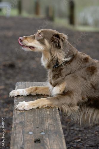 Unterwürfiger Hund