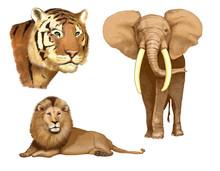 Tigre-leone-elefante