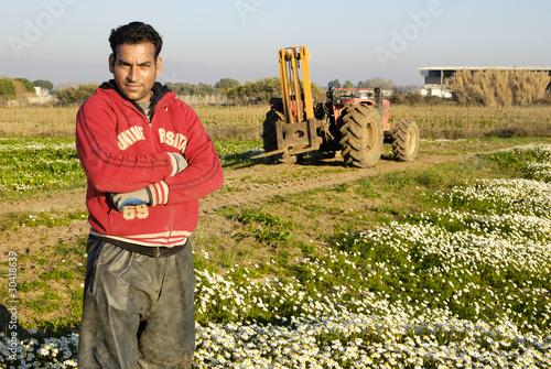 Canvastavla Immigrato al lavoro nei campi