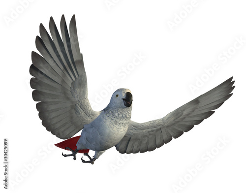 African Grey Parrot Flying Canvas Print