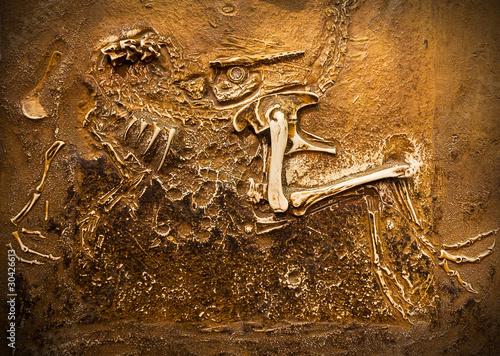 Tela  Fossil