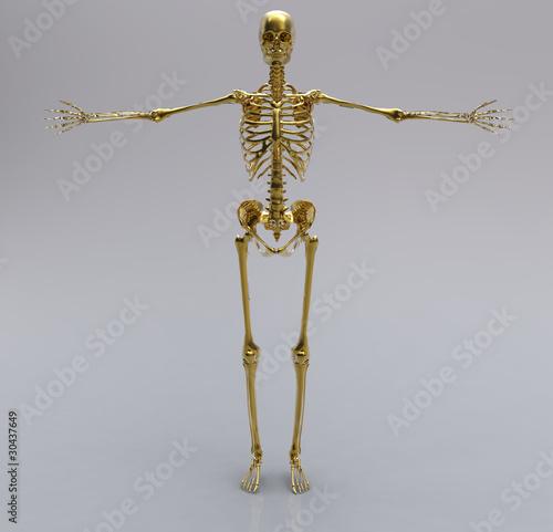 Photo  Human gold skeleton