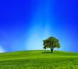 Leinwanddruck Bild - Green Planet
