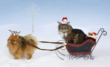 Christmas For Max & Jolie