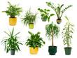 canvas print picture - Set mit acht freigestellten Zimmerpflanzen