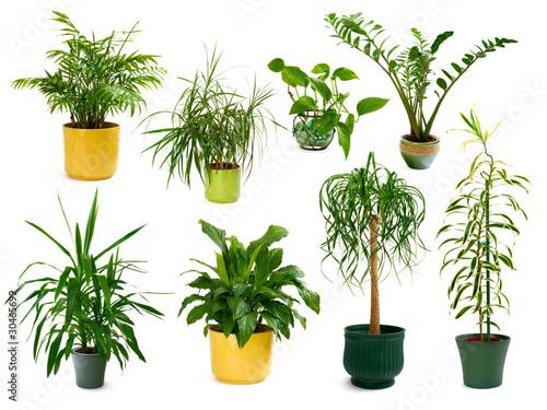Set mit acht freigestellten Zimmerpflanzen Fototapete