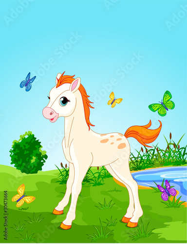 Garden Poster Pony Horse foal in the meadow