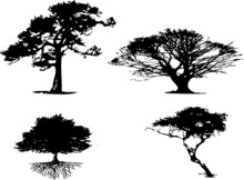 4 Different Types Of Tree Silh...