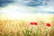 Mohn im Feld mit Wolken im Hintergrund