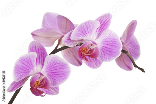 In de dag Orchidee Orchidee (light pink) #4
