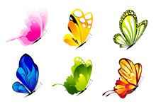 Colorful Butterlies