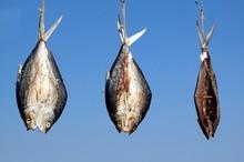 Three Fish Drying In The Sun