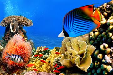 Fototapeta Zwierzęta Photo of a coral colony