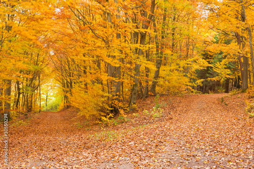 Fototapety do jadalni szlak-fall-forest