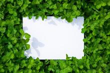 Paper_clover_042